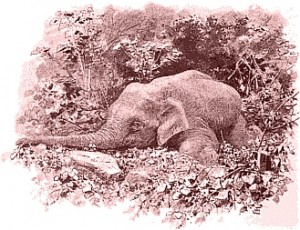 dead elephant (p. 74)